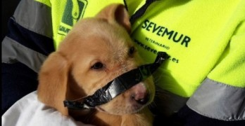 Neighbors Help Save Garbage Puppy with Taped Snout