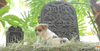 "Puppies Make Adorable Debut in ""Horror"" Clip"