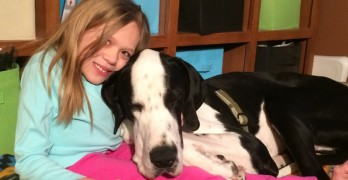 George the Great Dane Makes an Awesome Service Dog