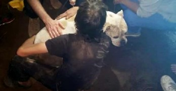 Community Digs and Saves Homeless Man's Dog
