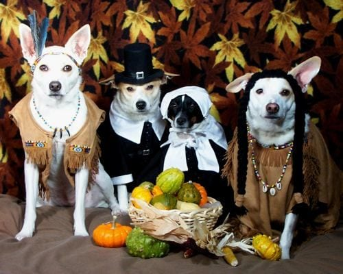 Photo via lifewithdogs.tv & Photos: Dogs Dress Up for Thanksgiving! - Orvis News
