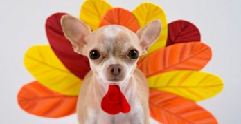 Celebrate Thanksgiving with the Dog
