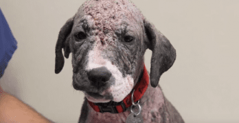 Amazing Transformation for Dog on Death Row