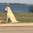 UPDATE: Dog Standing Guard Over Fallen Friend Claimed