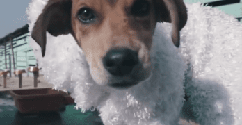 Stray Dogs Dressed as Pure Breeds Hope to Find Forever Homes