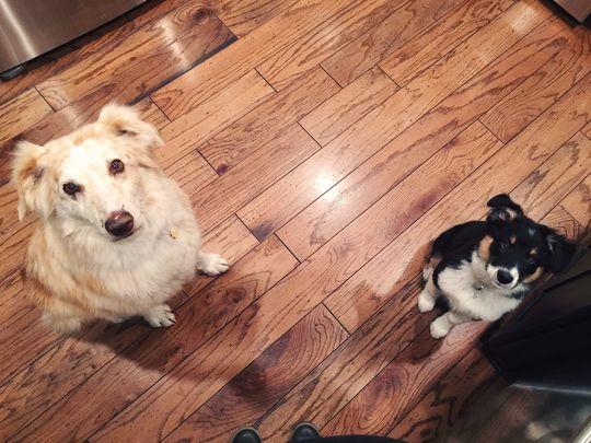Hank and Gus. Photo credit: Tiffany Whitsitt