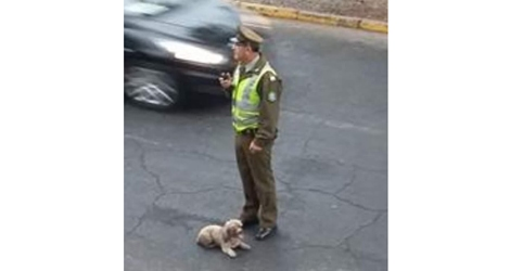 Police Stops Runaway Driver that Hit and Left Dog Injured