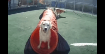 Video: Dogs Having Fun All Day Long