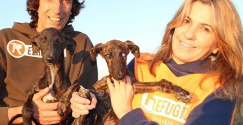 Rescuers Save Abandoned Greyhound Pup and Blind Sister