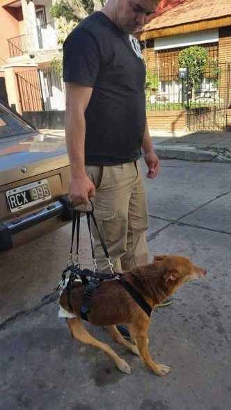 Two Weeks And Counting: Stolen Disabled Dog Still Missing