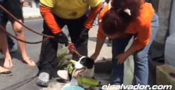 Dog Spends Two Days Trapped in River then Finds Forever Home