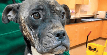 Dog Left for Dead in Dumpster Has Hopes for Better Life