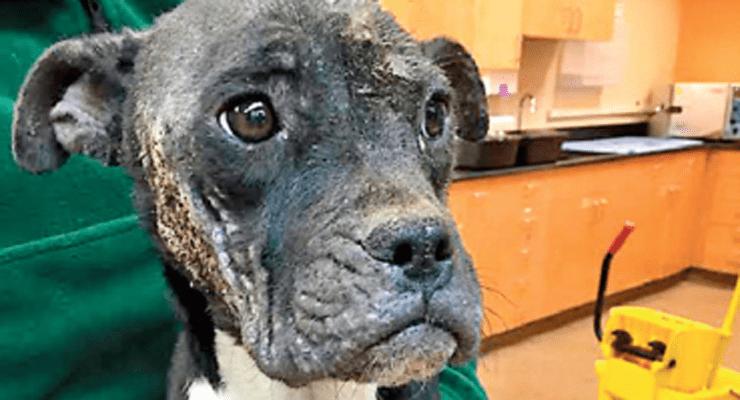 Dog Left for Dead in Dumpster Has Hopes for Better Life