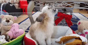 Puppy Sings Along