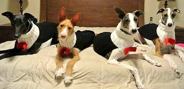 Woman Spends Over 4,000 Hours Knitting Sweaters for Abandoned Dogs
