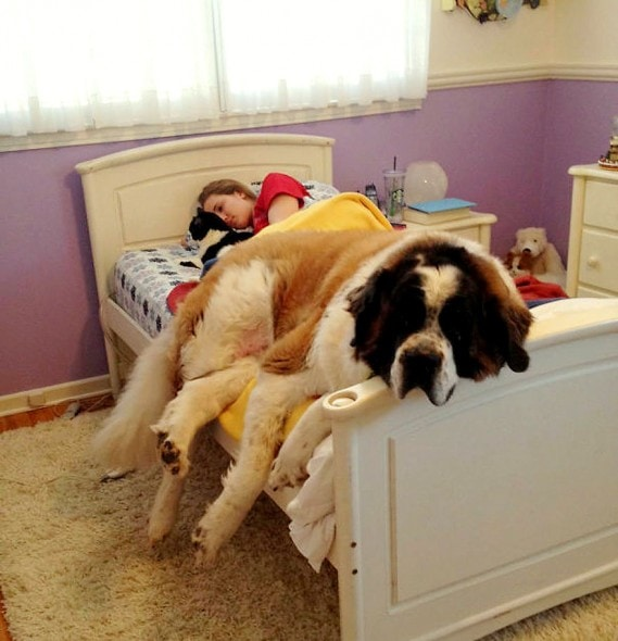 12.10.15 - Pros & Cons of Snoozing with Dogs1