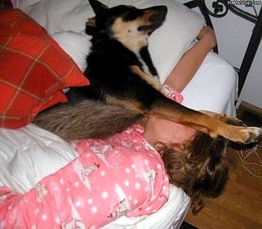 12.10.15 - Pros & Cons of Snoozing with Dogs2