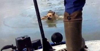 Russian Crew Saves Dog From Death in Icy River
