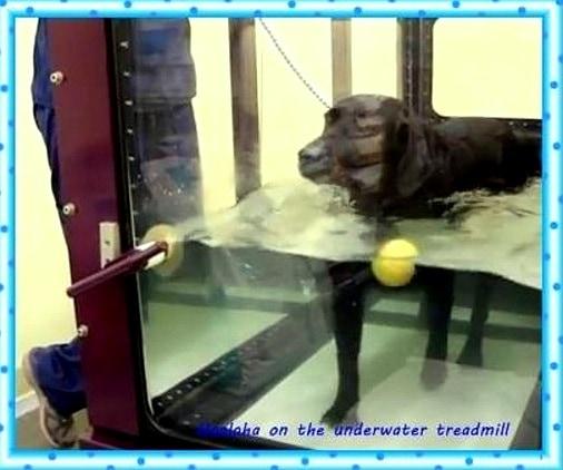 12.10.15 - Service Dog Hit by Car While Chasing Burglars4