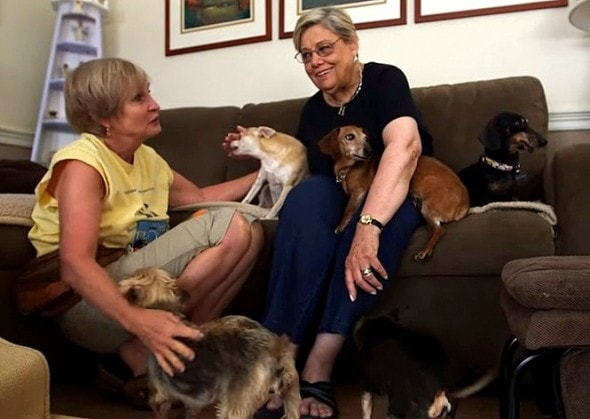 12.11.15 - Woman Opens Retirement Home for Dogs10