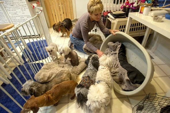 12.11.15 - Woman Opens Retirement Home for Dogs9