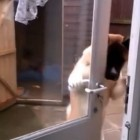 Smarty-Pants Dog Doesn't Need a Human to Let Him In