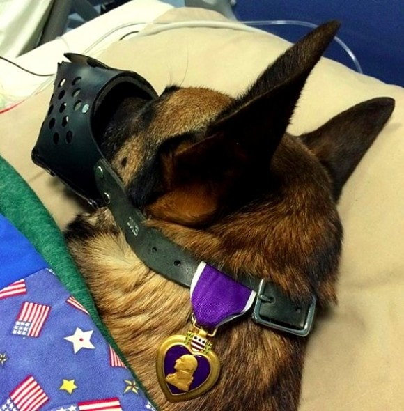 12.12.15 - Injured Soldier & Dog Get a Hospital Room Together2