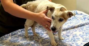 Homeless Blind Dog Has His Vision Restored