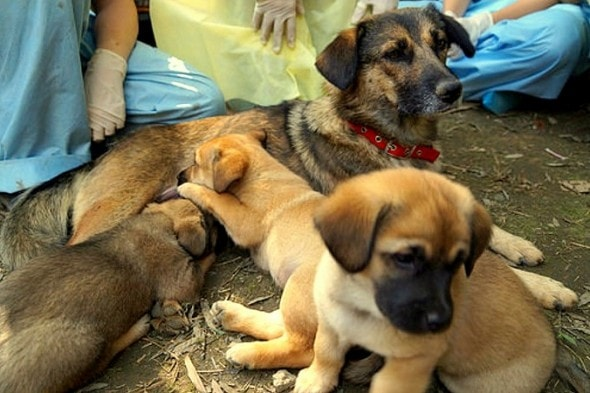 12.13.15 - Mama and Puppies Saved After Being Buried Alive1