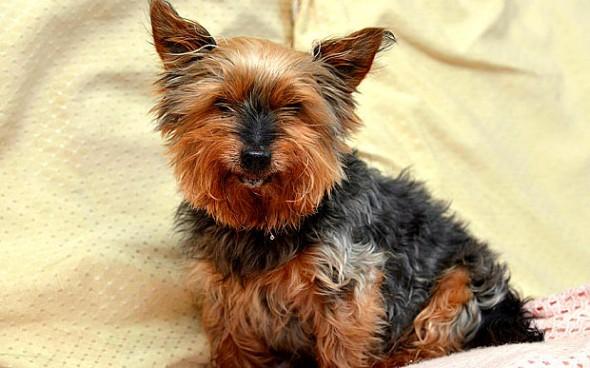 """12.16.15 - Britain's Oldest """"Puppy"""" Turns 261"""