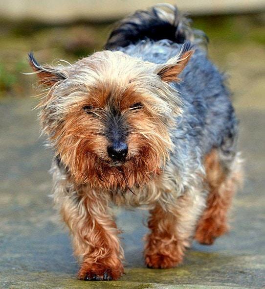 """12.16.15 - Britain's Oldest """"Puppy"""" Turns 262"""