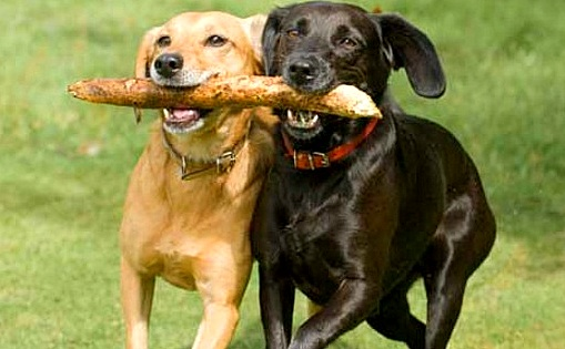 12.16.15 - New Study Shows Dogs Give Treats to Their Friends1