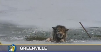Dog Trapped in Icy Waters gets Rescued by Some Brave People