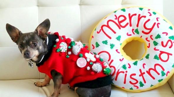 12.17.15 - Dog Ugly Christmas Sweater0