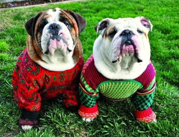 12.17.15 - Dog Ugly Christmas Sweater1