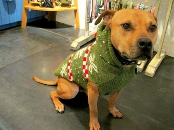 12.17.15 - Dog Ugly Christmas Sweater13