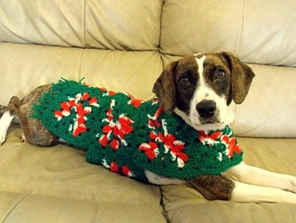 12.17.15 - Dog Ugly Christmas Sweater18