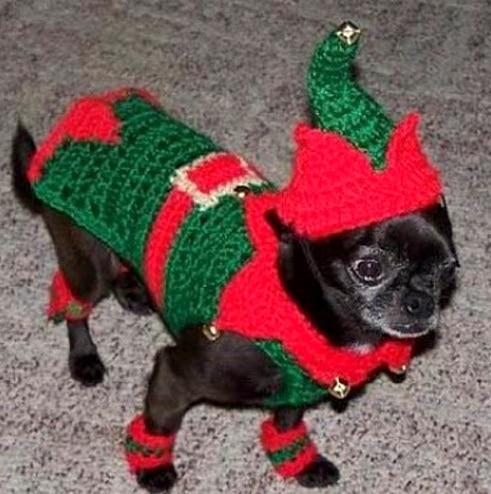 Dogs Who Are THRILLED With Their Christmas Sweaters