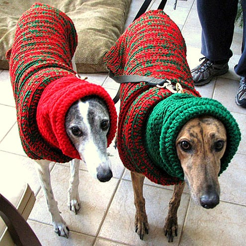 Dogs Who Are Thrilled With Their Christmas Sweaters Life