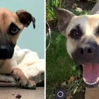 Angel's Christmas Miracle:  from Emaciated to Adored
