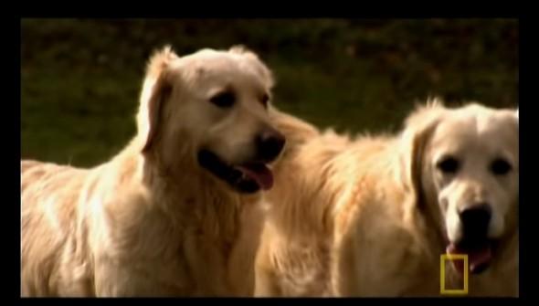 12.19.15 - puppy video3