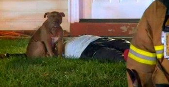 UPDATE: Precious the Pit Bull Finds Temporary Housing