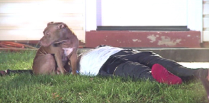 Pit Bull Stands Guard Over Injured Human After Fire
