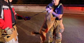 Dog Showers Rescuer with Kisses as a Thank You