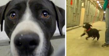Death Row Dog Gets Adopted and His Reaction Is Priceless