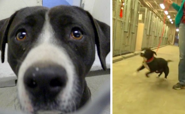 Dog On Death Row Gets Adopted