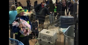 Colorado Shelter Gets Adoptions for Dogs Stranded by Collison