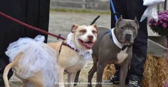 A Love Story Between two Rescue Dogs and Their Marriage