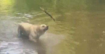 Impressive Stick Trick from Dog