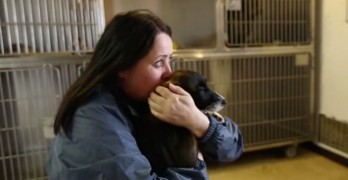 Homeless Dogs in Canadian No-Kill Shelter Facing New Threat